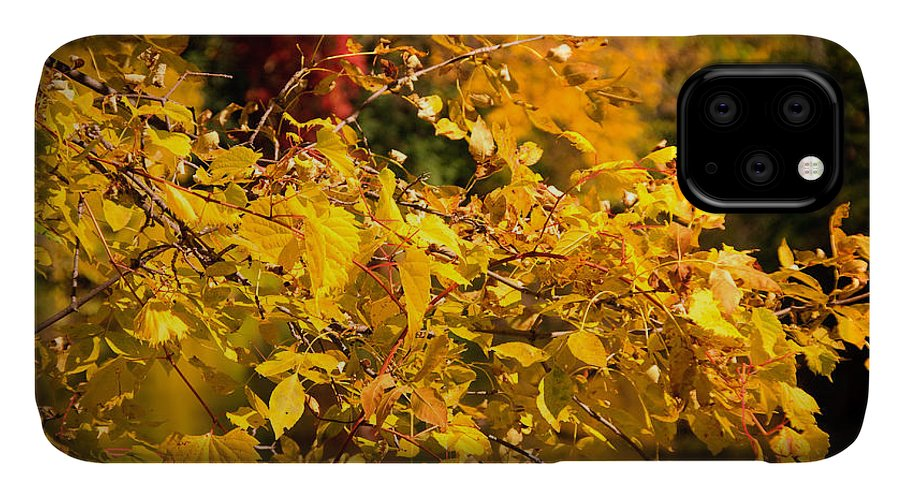 Fall IPhone Case featuring the photograph Warm Fall Colors by Bob Mintie