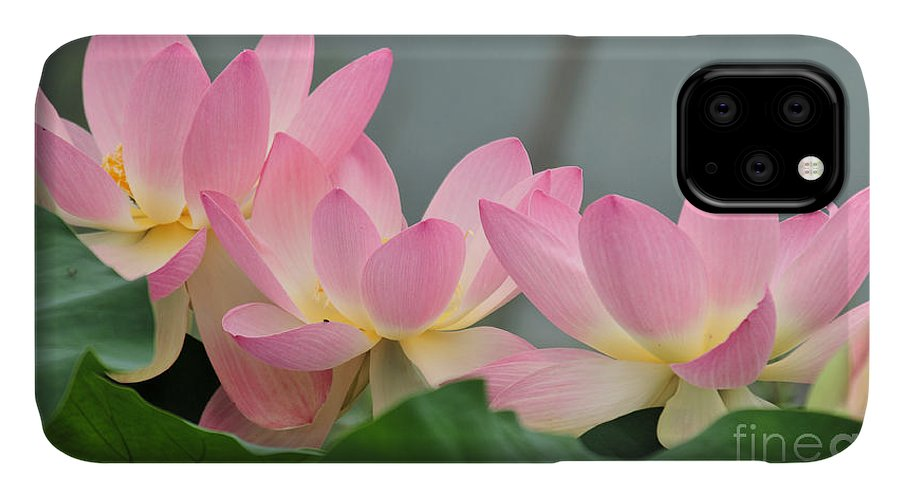 Water IPhone Case featuring the photograph water lily 57 Pink Lotus by Terri Winkler