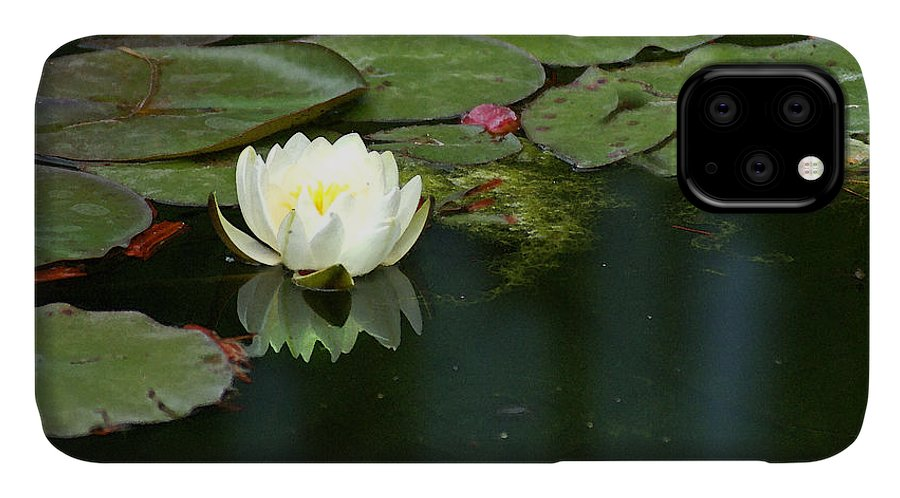 Lily IPhone Case featuring the photograph Water Lily by Heather Coen