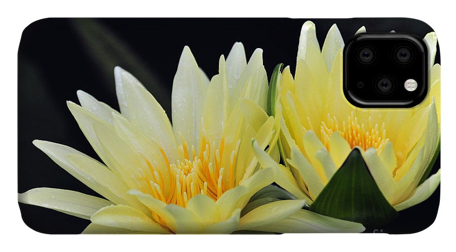 Flower IPhone Case featuring the photograph Water Lily Yellow Nymphaea by Terri Winkler