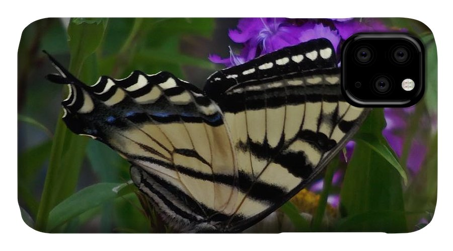 Western Tiger Swallowtail Butterfly IPhone Case featuring the photograph Western Tiger Swallowtail Butterfly Side View by Barbara St Jean
