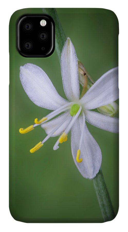 Abstract IPhone 11 Case featuring the photograph White Flower by Lynn Geoffroy