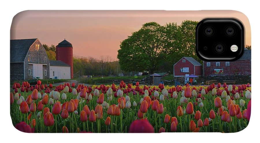 Tulips IPhone Case featuring the photograph Wicked Awesome Tulips by Tammie Miller