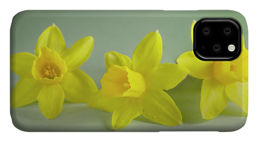 Yellow Mini Narcissus IPhone 11 Case featuring the photograph Yellow Mini Narcissus by Iris Richardson