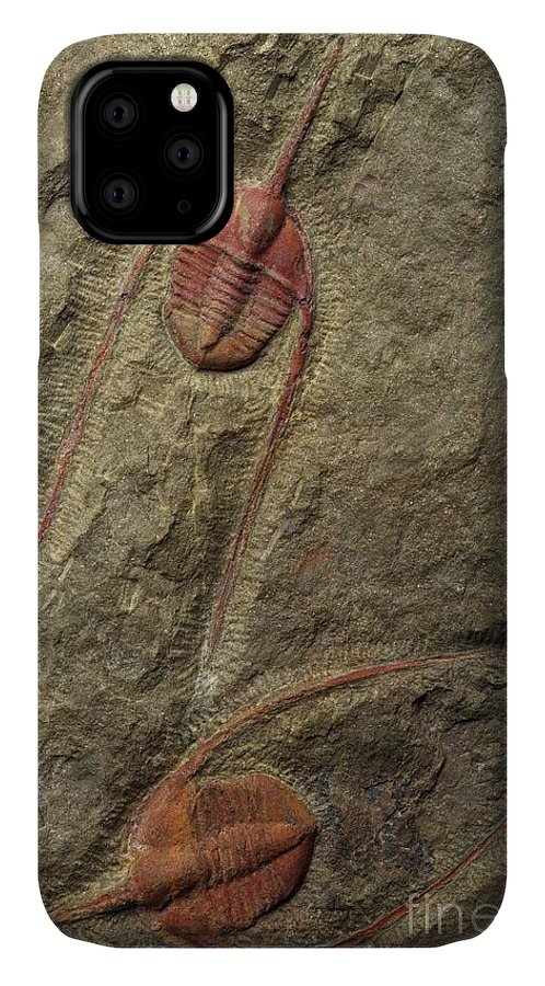 Ampyx Priscus IPhone Case featuring the photograph Ampyx Priscus by Sinclair Stammers/science Photo Library