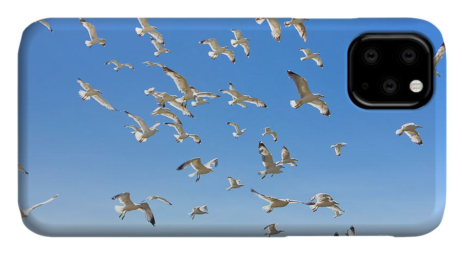 Greek IPhone 11 Case featuring the photograph Swarm Of Sea Gulls Flying Close To The by Smoxx