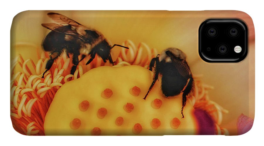 Bumblebees IPhone Case featuring the photograph Sweet Nectar 1 by Kathi Isserman