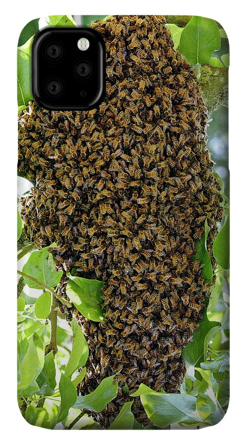 Honey Bees Swarming In A Plum Tree In The Cotswolds IPhone Case featuring the photograph 1161-1226 by Robert Harding Picture Library