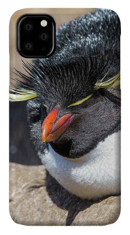 Archipelago IPhone Case featuring the photograph Magellanic Penguin At Beach, Falkland by Martin Zwick