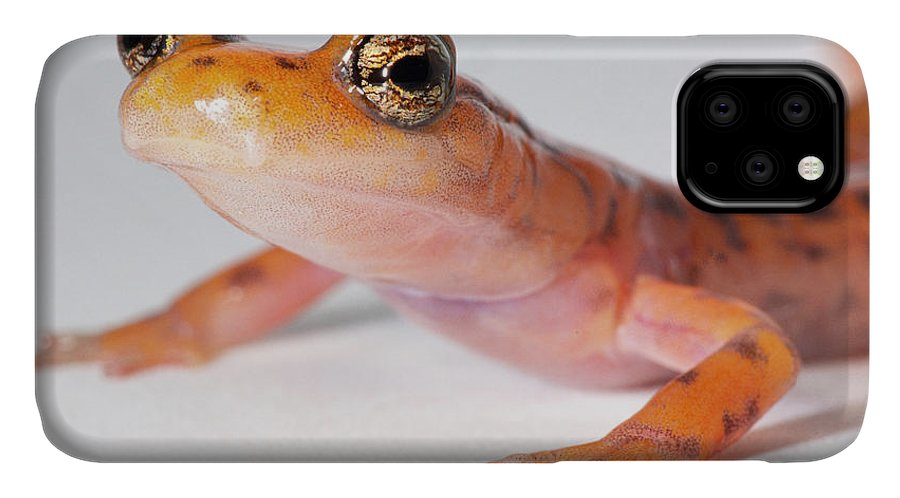 Aberrant Color Morph IPhone Case featuring the photograph Cave Salamander, Eurycea Lucifuga by Dante Fenolio