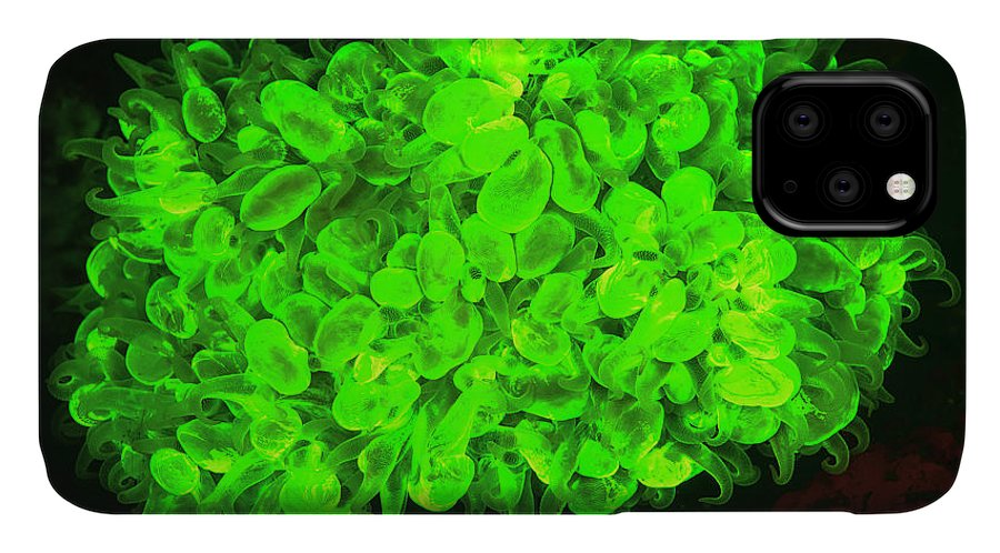 Asia IPhone 11 Case featuring the photograph Natural Occurring Fluorescence 7 by Stuart Westmorland