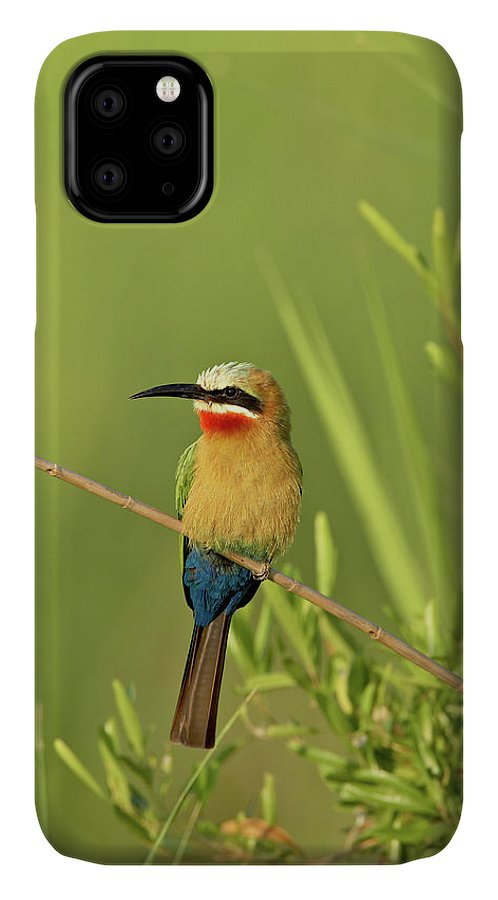 White-fronted Bee-eater (merops Bullockoides) IPhone Case featuring the photograph 764-1369 by Robert Harding Picture Library