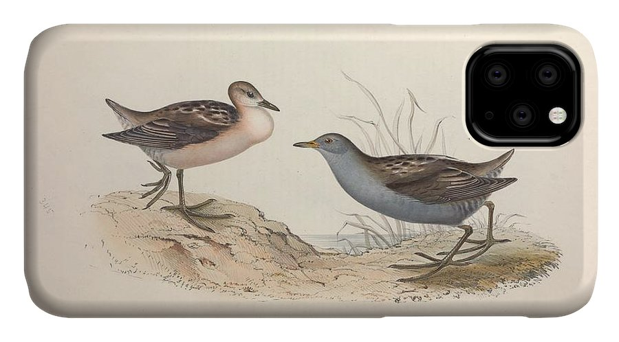 Nature IPhone 11 Case featuring the painting Different Types Of Birds Illustrated By Charles Dessalines D Orbigny 1806-1876 21 by Charles Dessalines D Orbigny