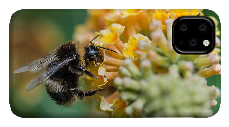 Stigma IPhone Case featuring the photograph A Macro Shot Of A Bumblebee Enjoying by Ian Grainger