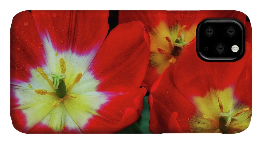 Como Consevatory IPhone Case featuring the photograph A Trio Of Color I by Kathi Isserman