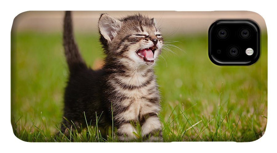 Small IPhone Case featuring the photograph Adorable Meowing Tabby Kitten Outdoors by Otsphoto