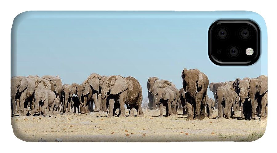 Multiple IPhone Case featuring the photograph African Elephant Herd by Dr P. Marazzi/science Photo Library