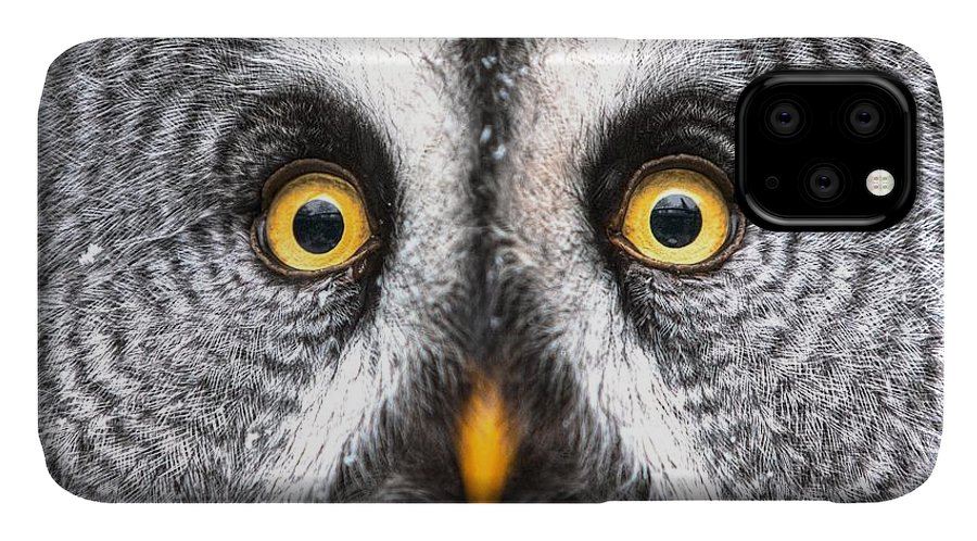 Feather IPhone Case featuring the photograph Amazed Great Grey Owl Hdr by Pics-xl