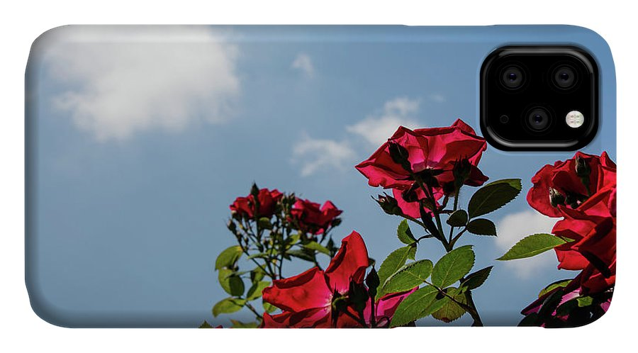 Nature IPhone 11 Case featuring the photograph Angled by Deborah Klubertanz