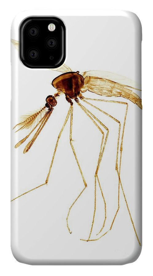 Anopheles Maculipennis IPhone Case featuring the photograph Anopheles Mosquito Male by Dr Keith Wheeler/science Photo Library