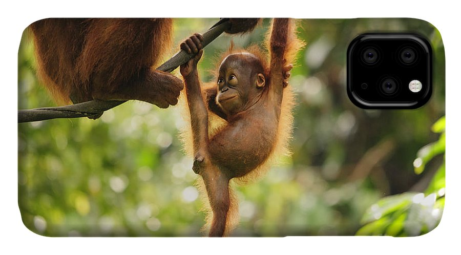 Facial Expression IPhone Case featuring the photograph Baby Orangutan Playing by Wayneimage