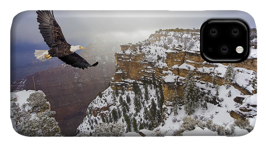 Feather IPhone Case featuring the photograph Bald Eagle Flying Above Grand Canyon by Steve Collender