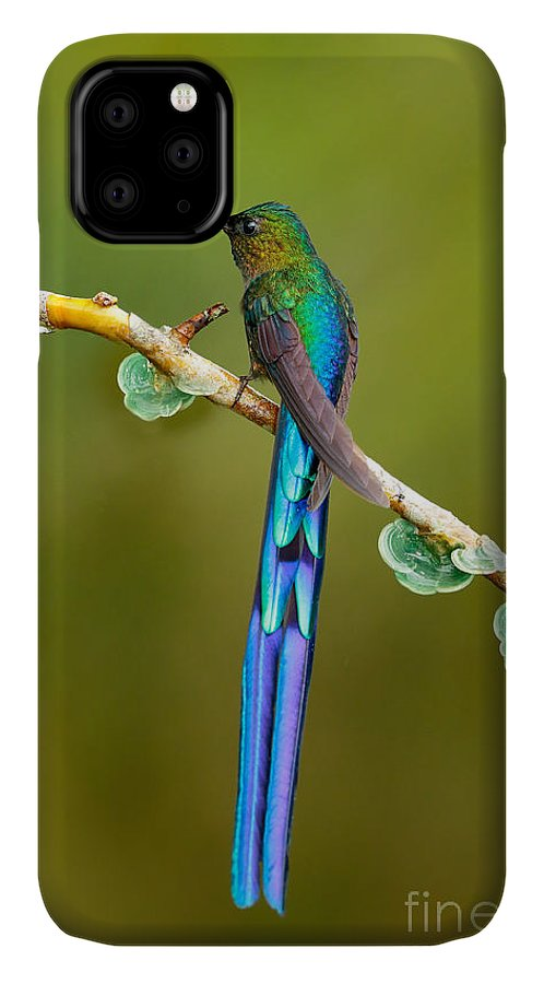 Magic IPhone Case featuring the photograph Beautiful Blue Glossy Hummingbird With by Ondrej Prosicky