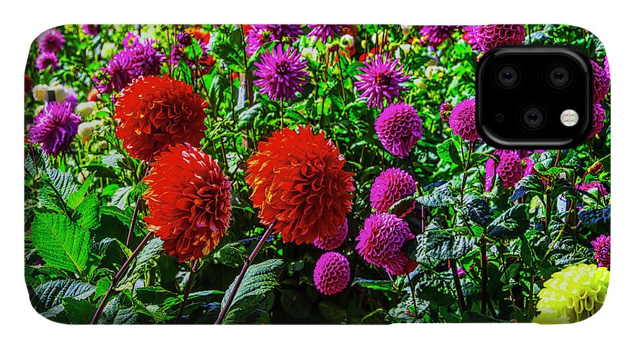 Mood IPhone 11 Case featuring the photograph Beautiful Dahlia Garden by Garry Gay