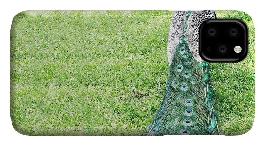 Feather IPhone Case featuring the photograph Beautiful Male Peacock On The Grass by Valentina Photos