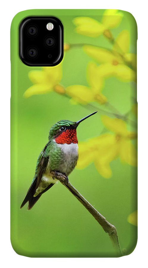 Hummingbird IPhone 11 Case featuring the photograph Beautiful Summer Hummer by Christina Rollo