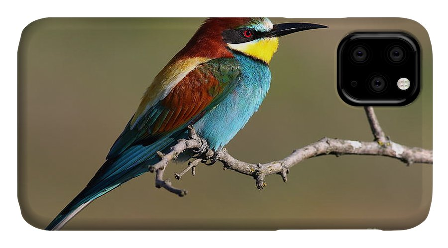 Forest IPhone Case featuring the photograph Bee Eater by Peter Gyure