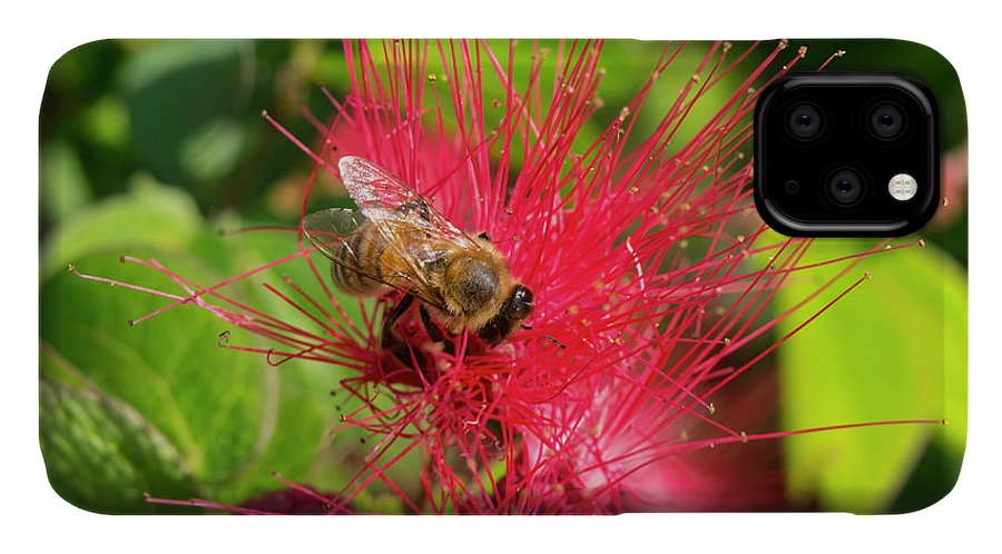 Bee On Red Flower IPhone Case featuring the photograph Bee On Red Flower by Robert Michaud