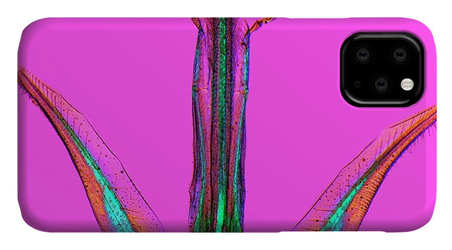 Apis Mellifera IPhone Case featuring the photograph Bee Proboscis by Dr Keith Wheeler/science Photo Library