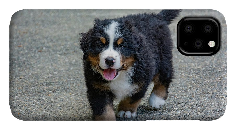 Dog IPhone 11 Case featuring the photograph Bernese Mountain Dog Puppy 2 by Pelo Blanco Photo