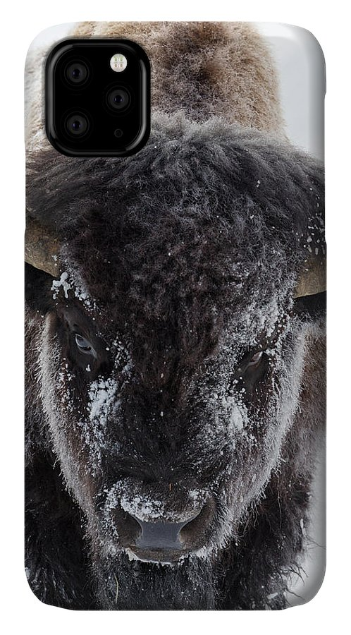 Autumn IPhone Case featuring the photograph Black Bear Autumn Huckleberry by Ken Archer