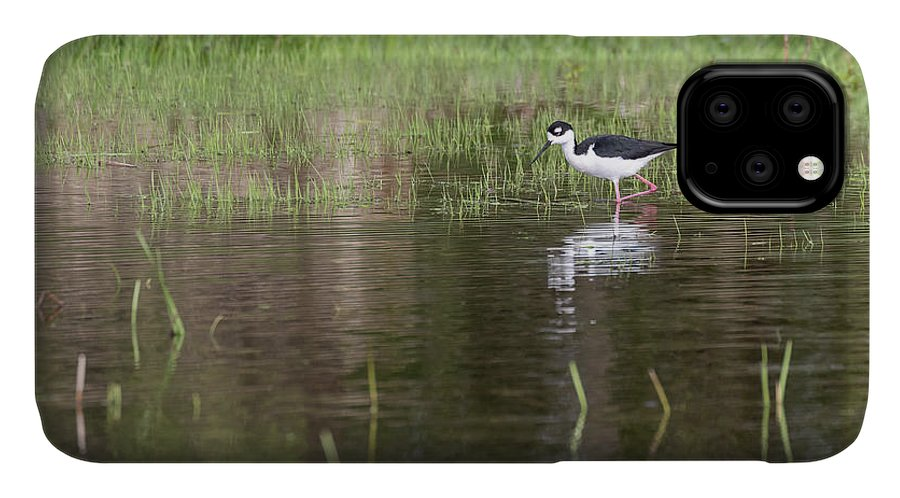 Black-necked Stilt (himantopus Mexicanus) IPhone 11 Case featuring the photograph Black-necked Stilt 2018-1 by Thomas Young