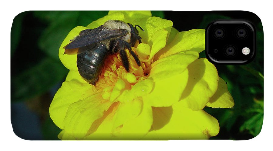 Bumblebee IPhone Case featuring the photograph Bumblebee by Audrey