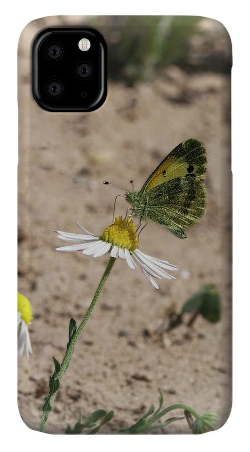 Betty Depee IPhone Case featuring the photograph Butterfly Day by Betty Depee