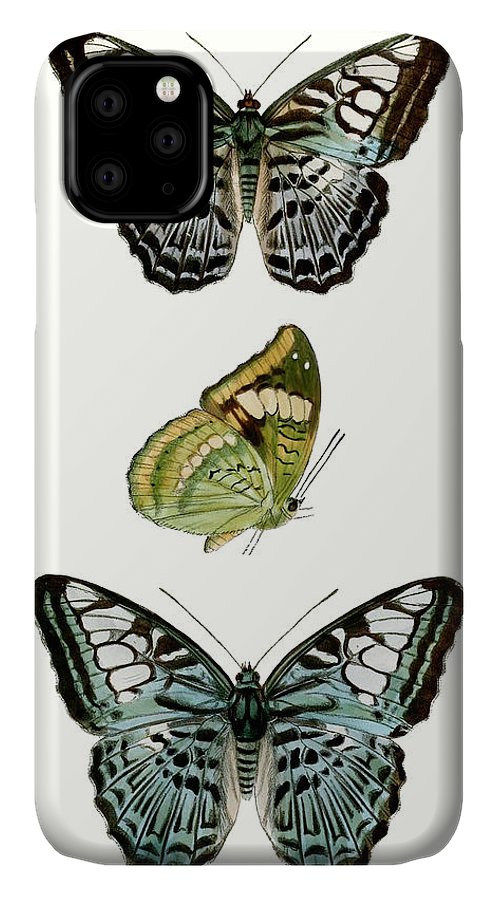 Animals & Nature+butterflies & Bees IPhone Case featuring the painting Butterfly Specimen I by Vision Studio