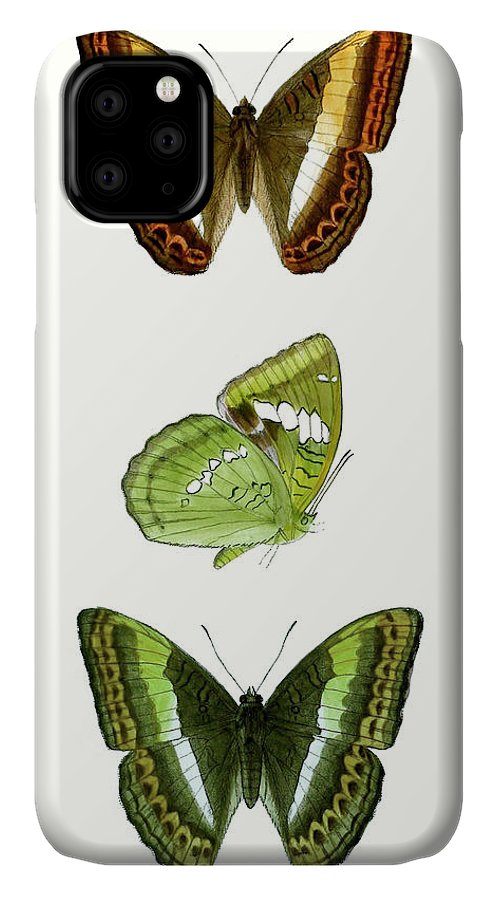 Animals & Nature+butterflies & Bees IPhone Case featuring the painting Butterfly Specimen IIi by Vision Studio
