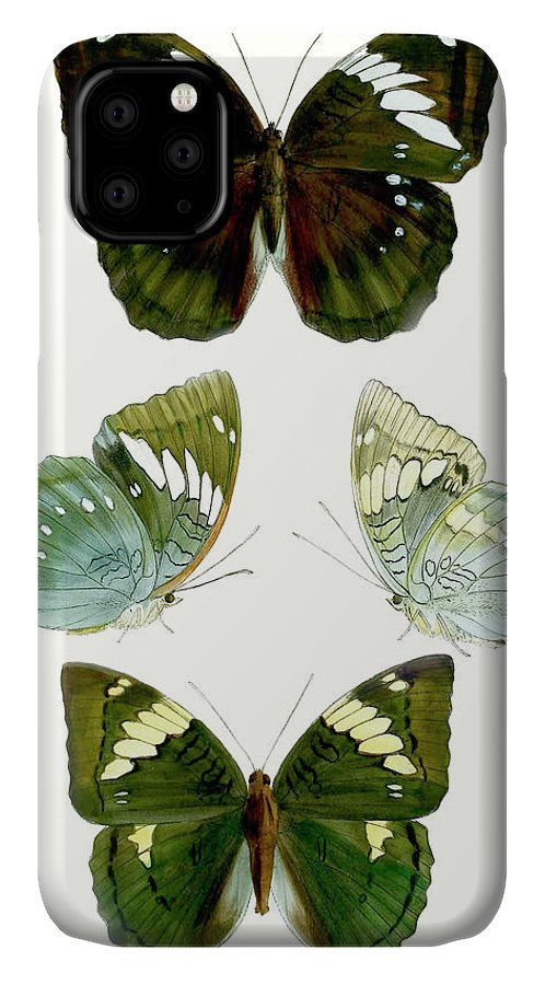 Animals & Nature+butterflies & Bees IPhone Case featuring the painting Butterfly Specimen Iv by Vision Studio
