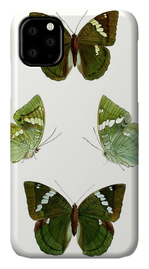 Animals & Nature+butterflies & Bees IPhone Case featuring the painting Butterfly Specimen V by Vision Studio
