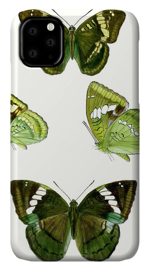 Animals & Nature+butterflies & Bees IPhone Case featuring the painting Butterfly Specimen Vii by Vision Studio