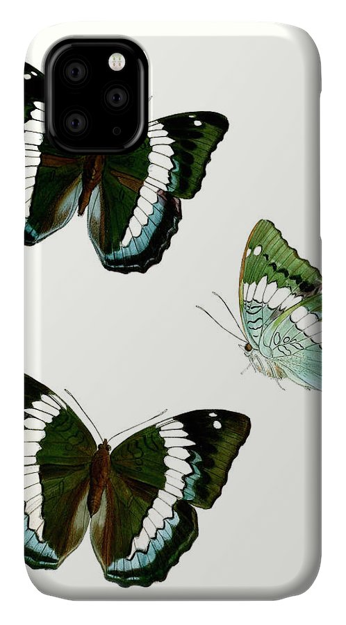 Animals & Nature+butterflies & Bees IPhone Case featuring the painting Butterfly Specimen Viii by Vision Studio