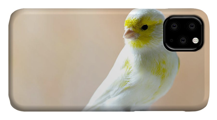 Feather IPhone Case featuring the photograph Canary Bird Sitting On A Twig by Pieropoma