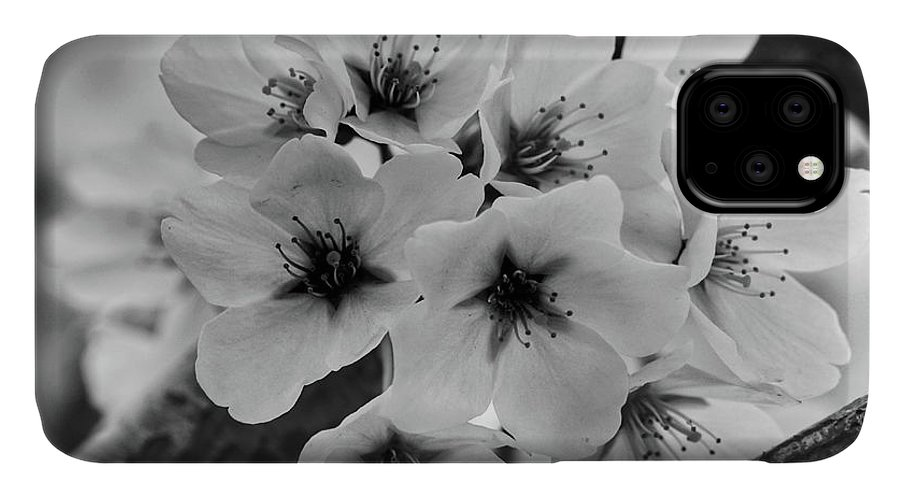 Cherry Blossoms IPhone Case featuring the photograph Cherry Blossoms 2019 E by Kathi Isserman