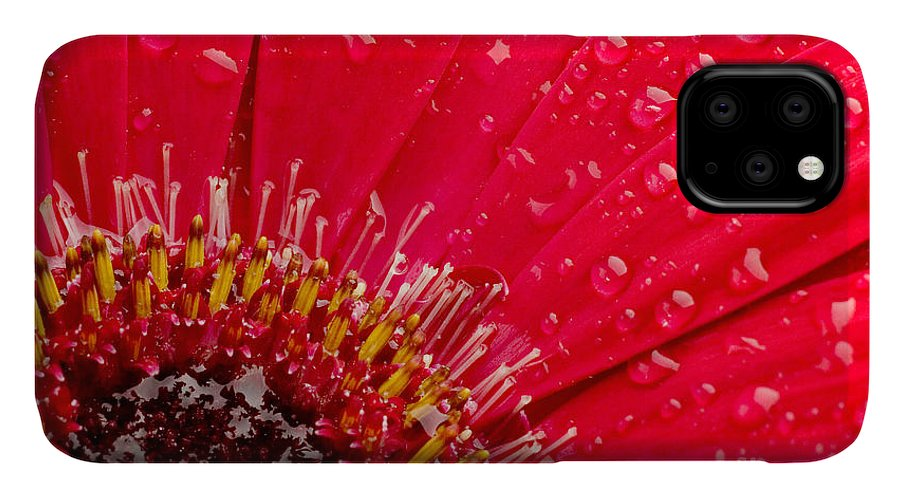Drop IPhone Case featuring the photograph Close-up Of A Red Daisy With Water by Johan Swanepoel