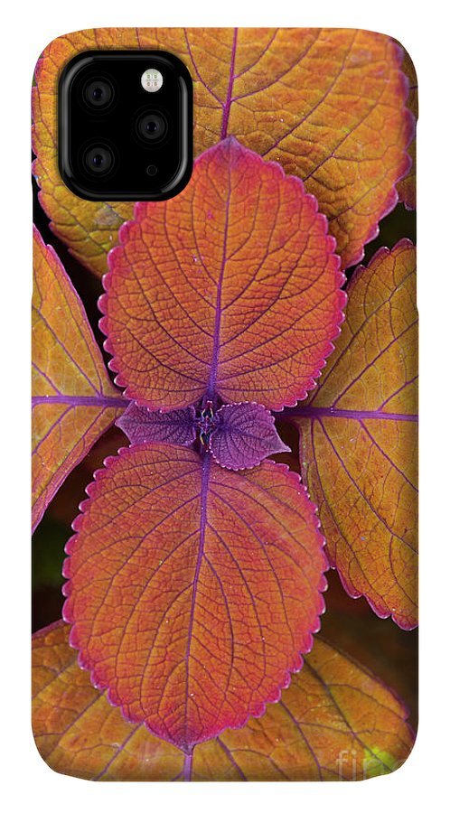Coleus Campfire IPhone Case featuring the photograph Coleus Campfire Leaves by Tim Gainey