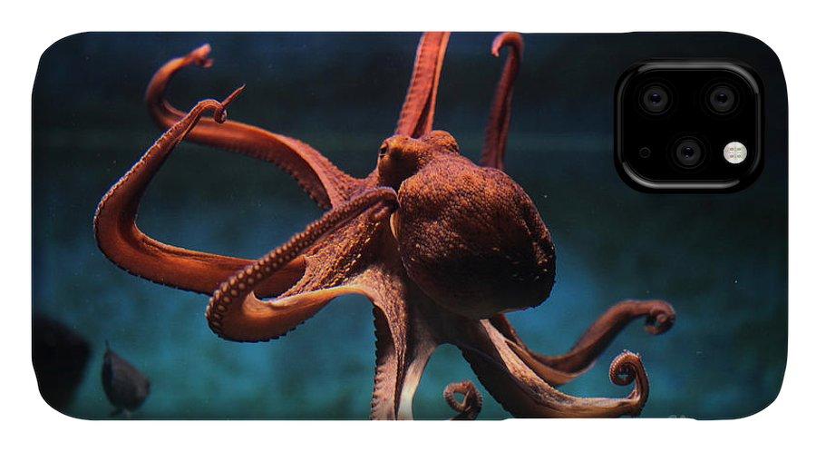 Octopus IPhone Case featuring the photograph Common Octopus Octopus Vulgaris by Vladimir Wrangel