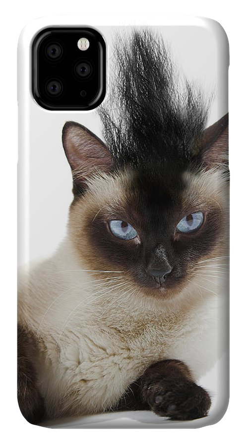 Cool Cat 2 IPhone Case featuring the photograph Cool Cat 2 by J Hovenstine Studios